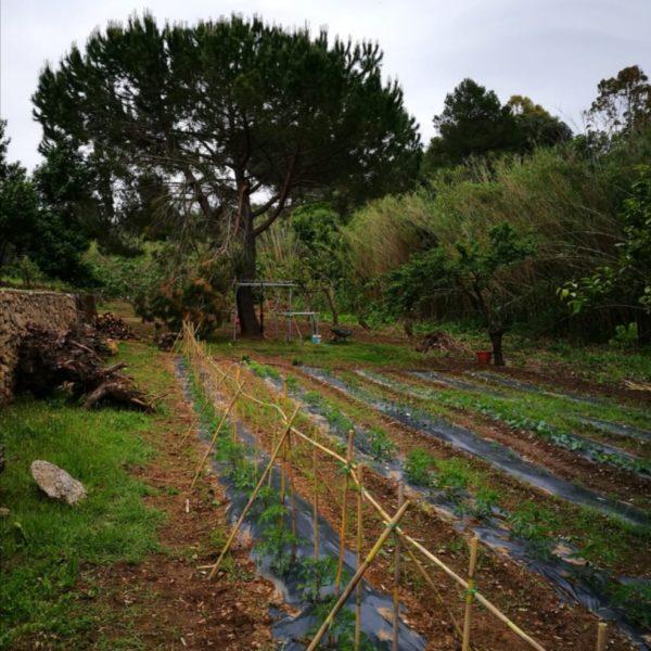 mandras-lentas-osteria-prodotti-bio-alghero09